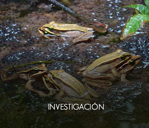 _investigacionOff