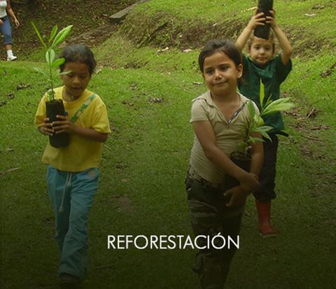 _reforestacionOff