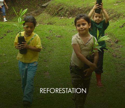 reforestacionOff