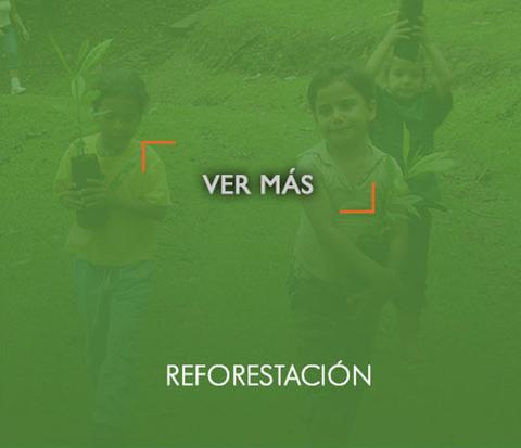_reforestacionOn